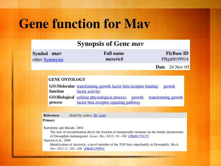 Gene function for Mav