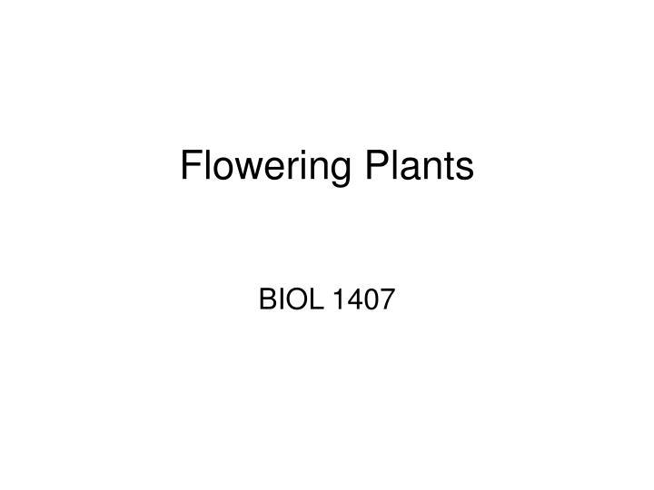 flowering plants n.