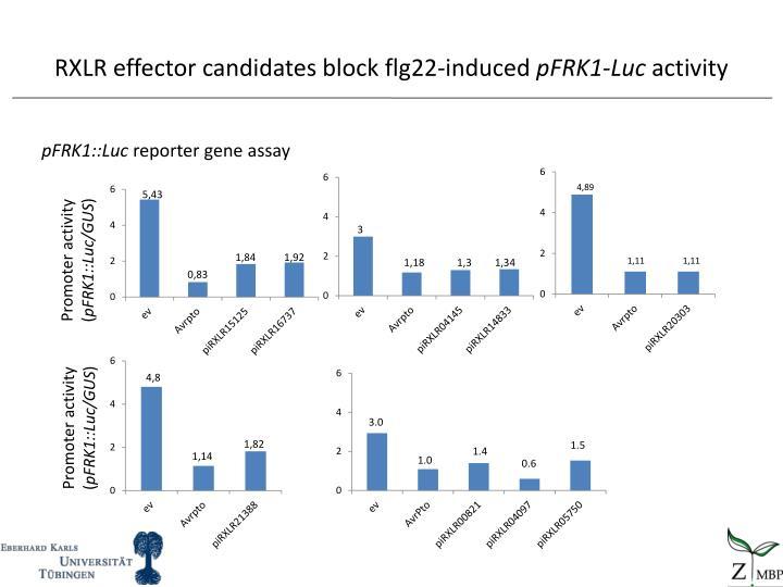 RXLR effector candidates block