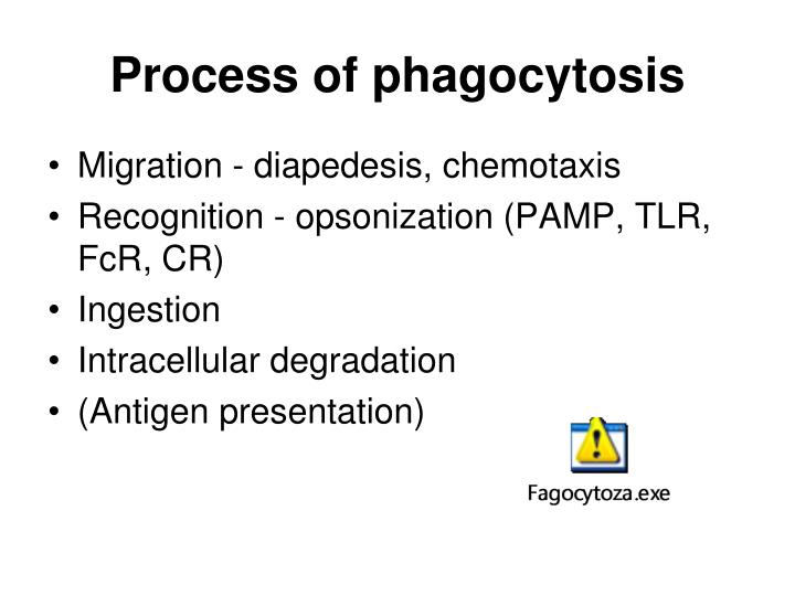 Process of phagocytosis