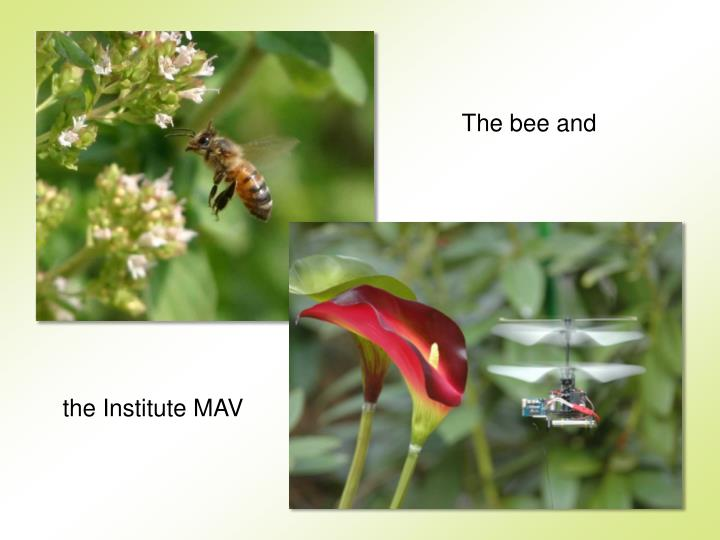 The bee and