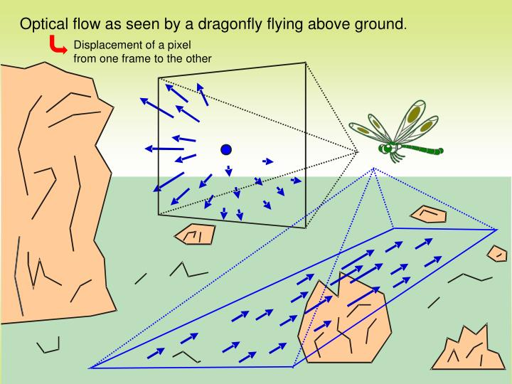 Optical flow as seen by a dragonfly flying above ground