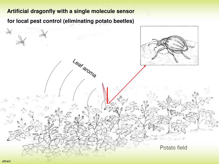Artificial dragonfly with a single molecule sensor for local pest control (eliminating potato beetles)