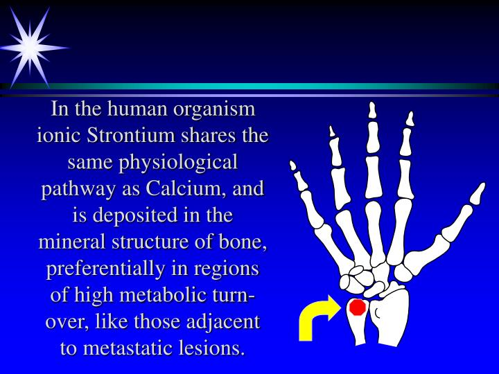 In the human organism ionic Strontium shares the same physiological pathway as Calcium, and is deposited in the mineral structure of bone, preferentially in regions of high metabolic turn-over, like those adjacent to metastatic lesions.