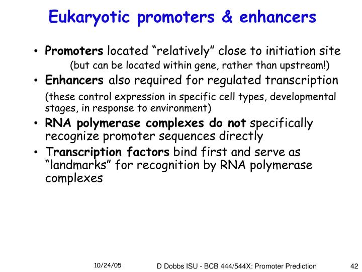 Eukaryotic promoters & enhancers