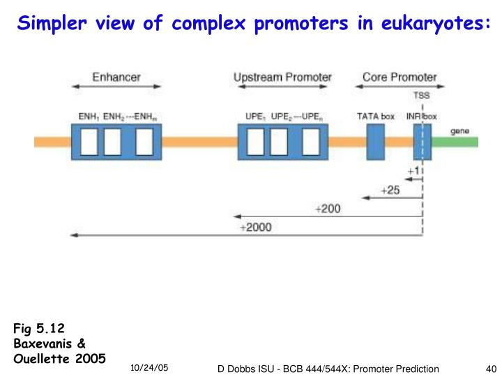Simpler view of complex promoters in eukaryotes: