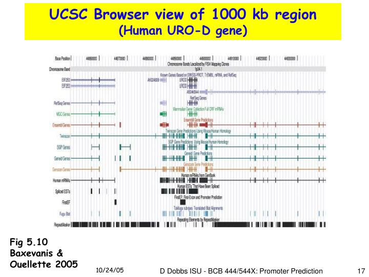 UCSC Browser view of 1000 kb region