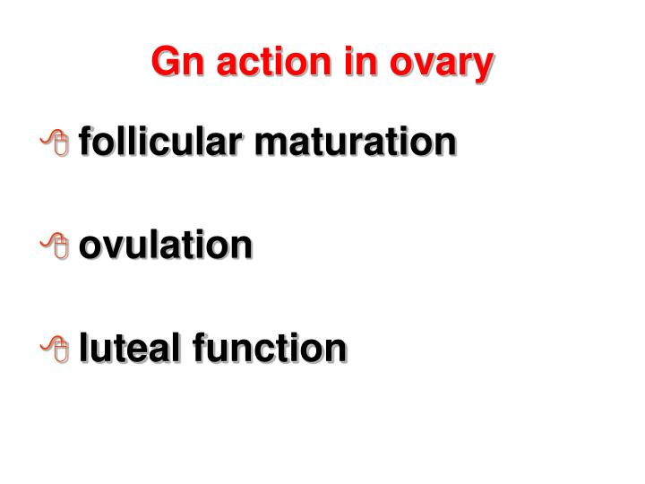 Gn action in ovary