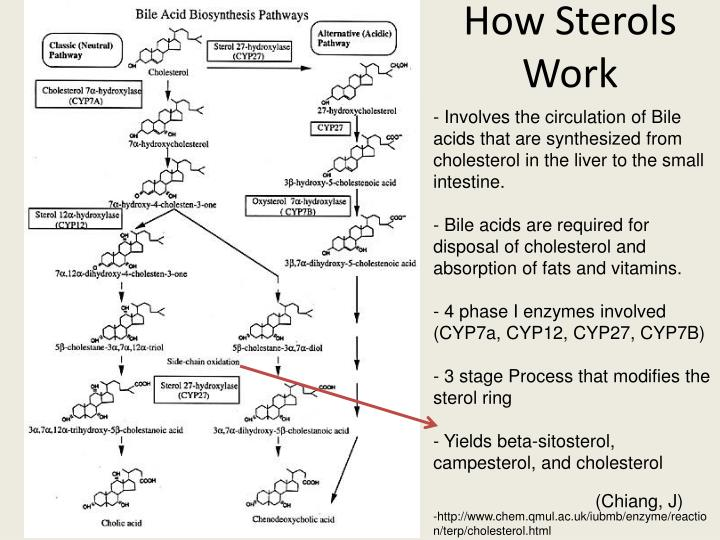 How Sterols Work