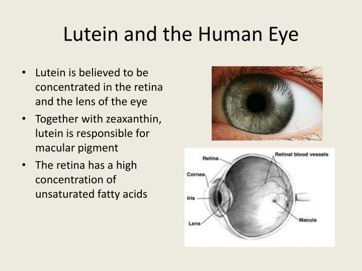 Lutein and the Human Eye