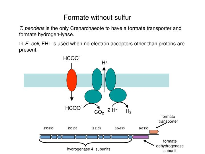 Formate without sulfur