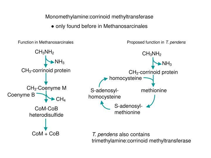Monomethylamine:corrinoid methyltransferase