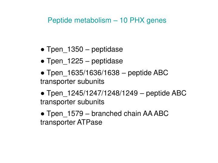 Peptide metabolism – 10 PHX genes