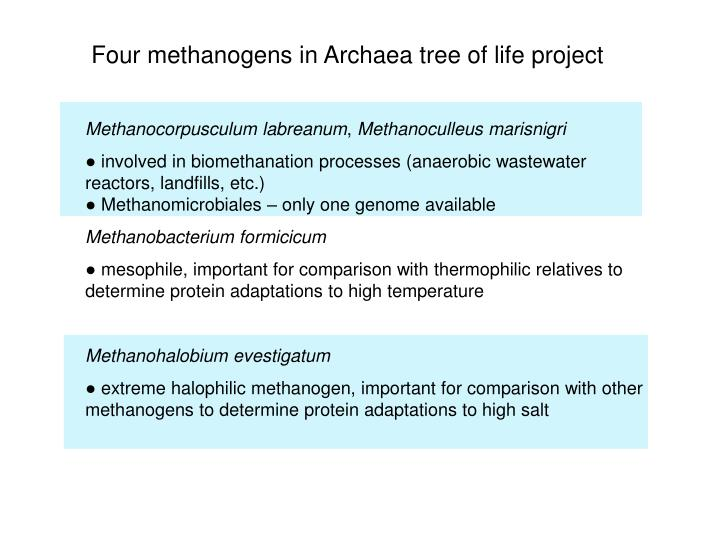 Four methanogens in Archaea tree of life project