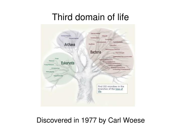 Third domain of life