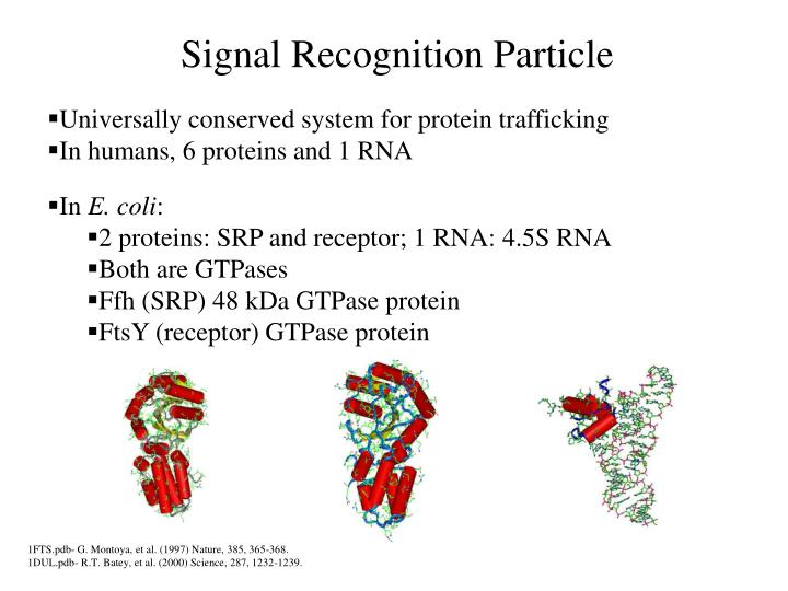 Signal Recognition Particle