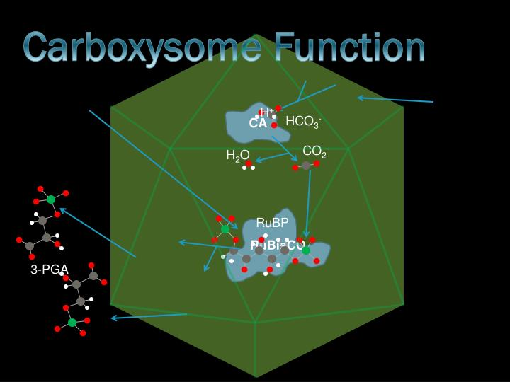 Carboxysome