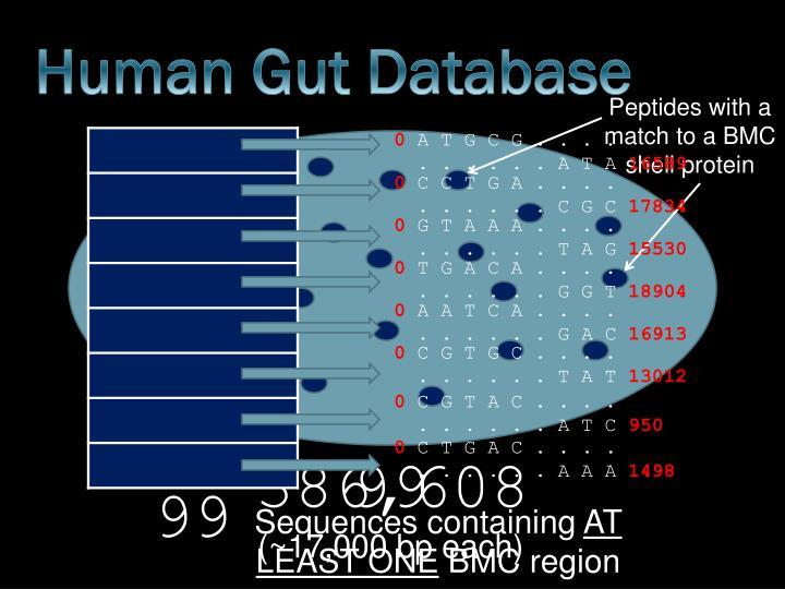 Human Gut Database