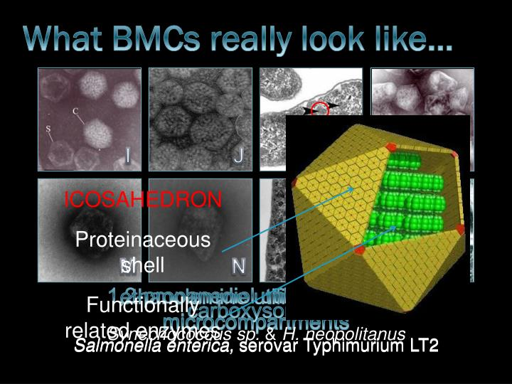What BMCs really look like…