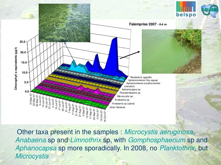 Other taxa present in the samples :