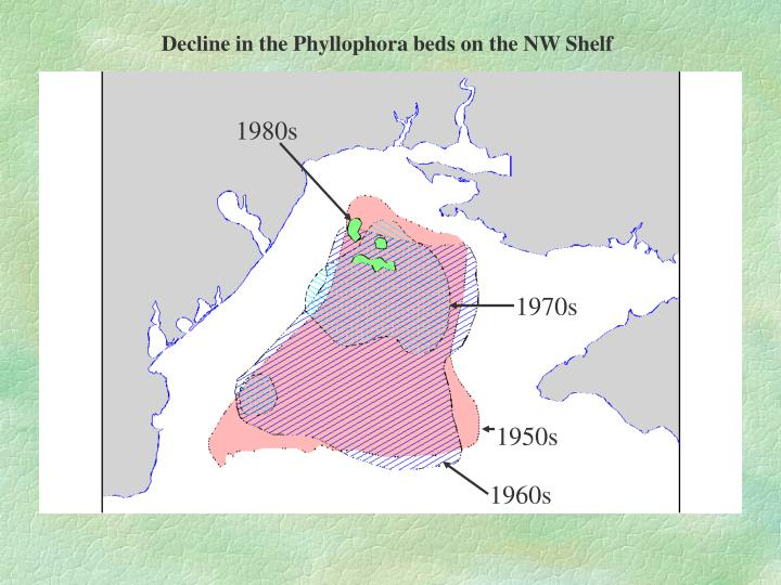 Decline in the Phyllophora beds on the NW Shelf