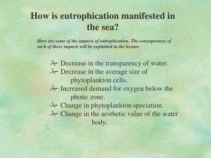 How is eutrophication manifested in the sea?