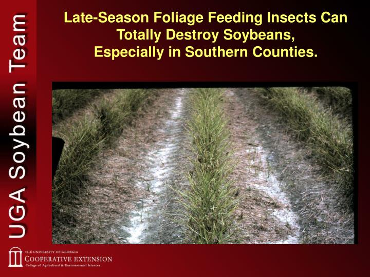 Late-Season Foliage Feeding Insects Can Totally Destroy Soybeans,