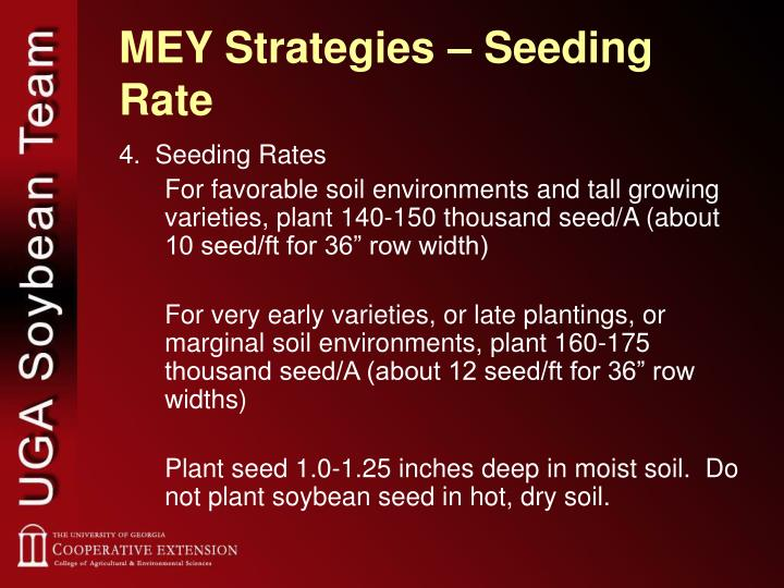 MEY Strategies – Seeding Rate
