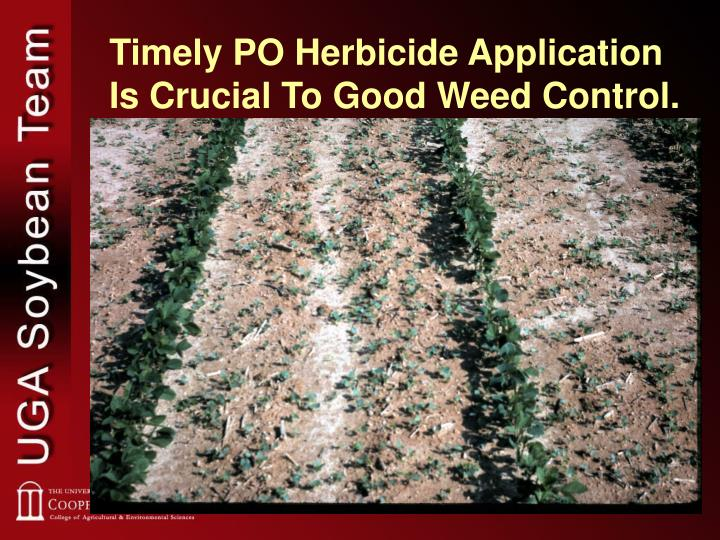 Timely PO Herbicide Application Is Crucial To Good Weed Control.
