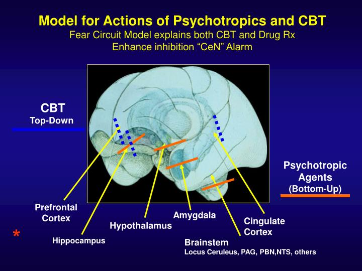 Model for Actions of Psychotropics and CBT
