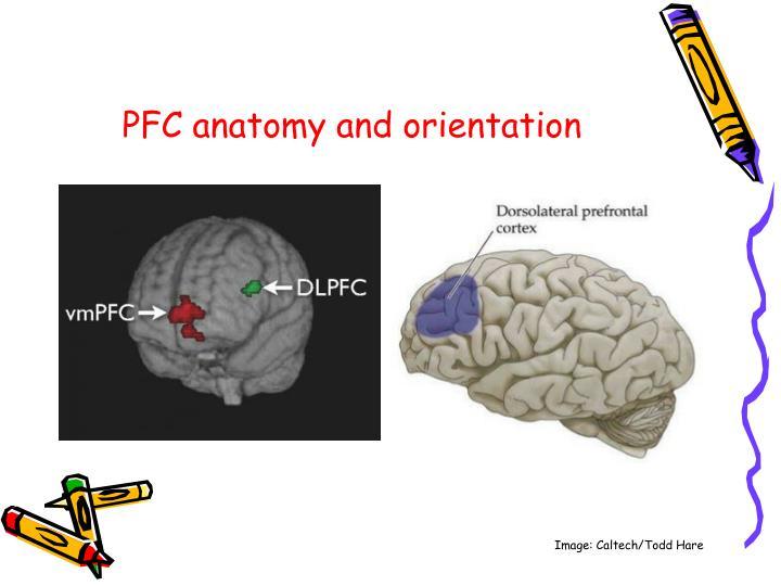 PFC anatomy and orientation