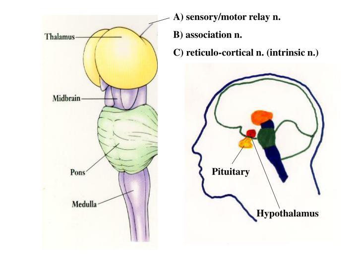 A) sensory/motor relay n.