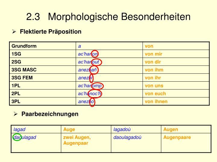 2.3 Morphologische Besonderheiten