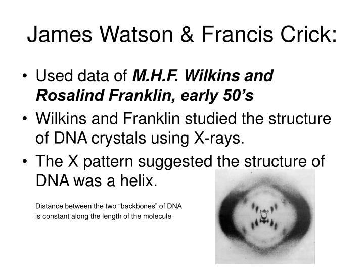 James Watson & Francis Crick: