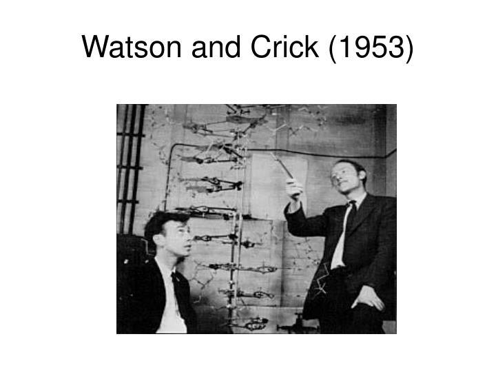 Watson and Crick (1953)