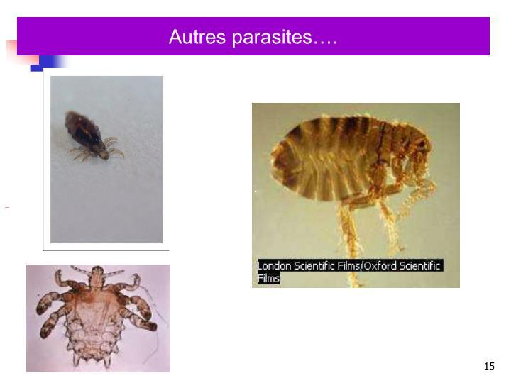 Autres parasites….