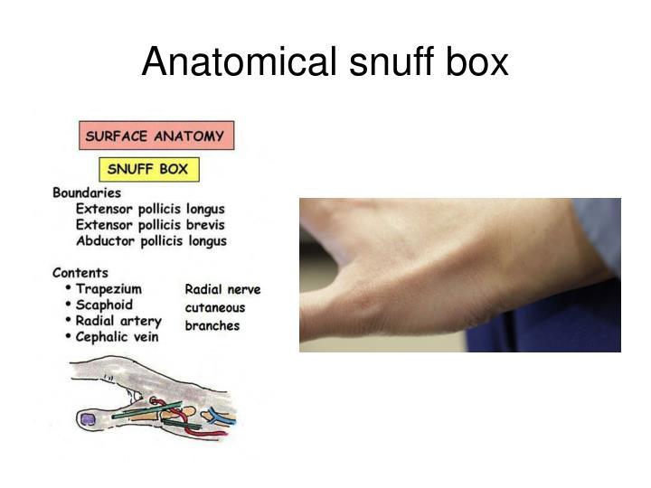Anatomical snuff box