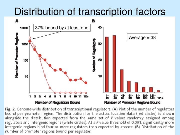 Distribution of transcription factors