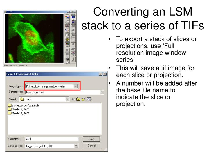 Converting an LSM stack to a series of TIFs