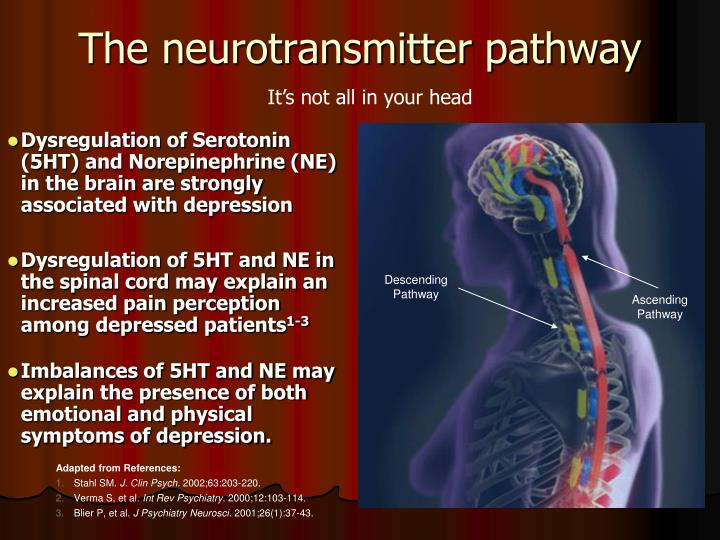 The neurotransmitter pathway