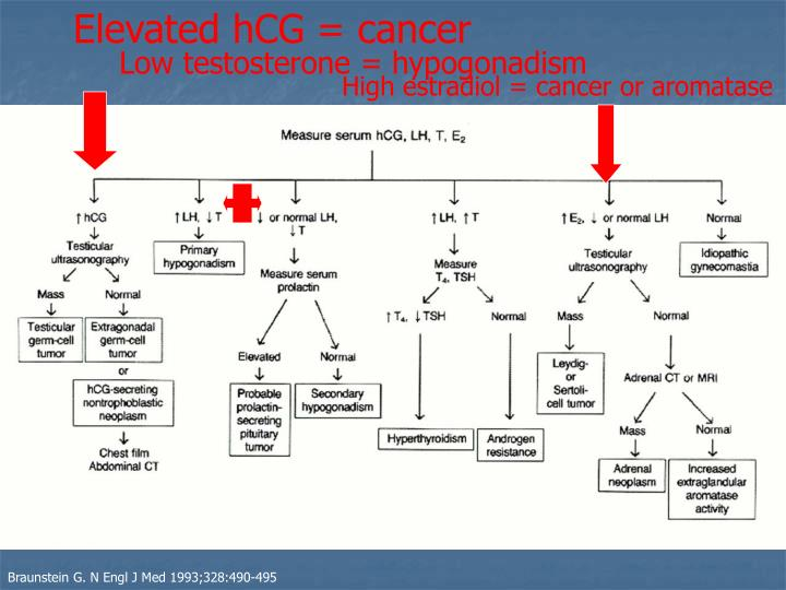 Elevated hCG = cancer
