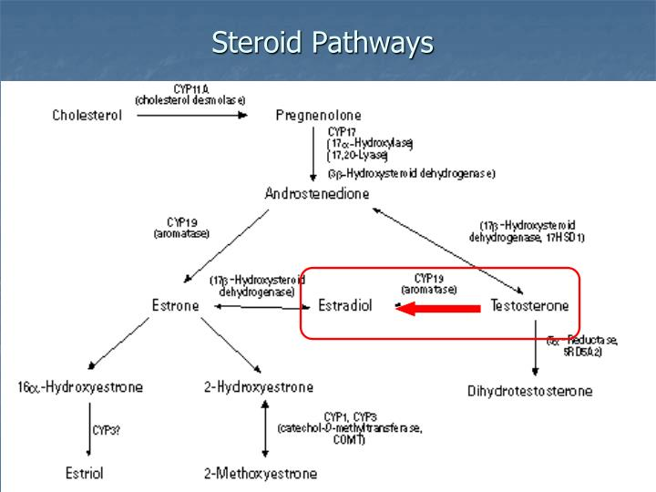 Steroid Pathways