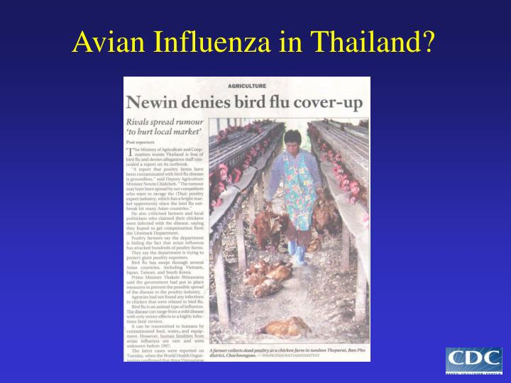 Avian Influenza in Thailand?