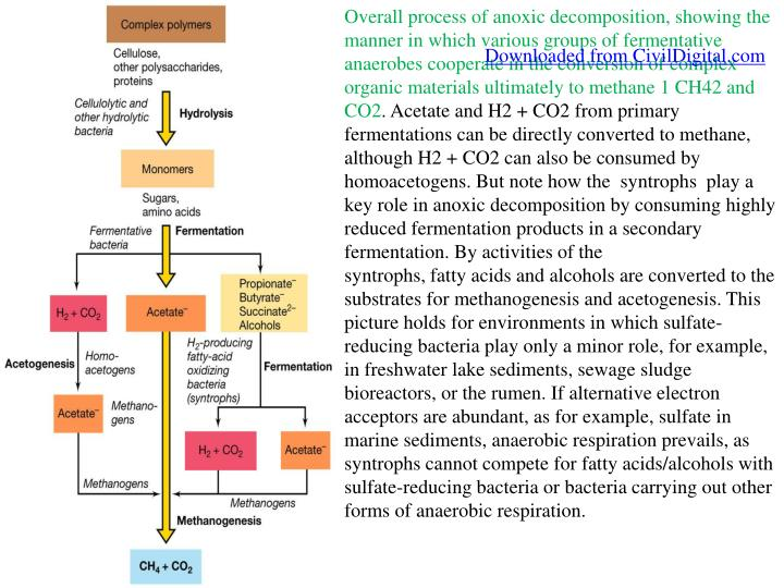 Overall process of anoxic decomposition, showing the manner in which various groups of fermentative anaerobes cooperate in the conversion of complex organic materials ultimately to methane 1 CH42 and CO2