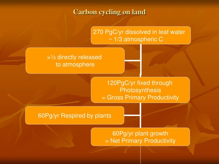 Carbon cycling on land