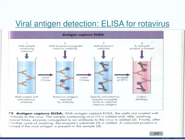 Viral antigen detection: ELISA for rotavirus