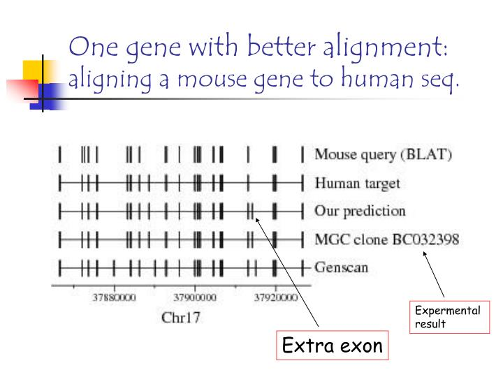 One gene with better alignment: