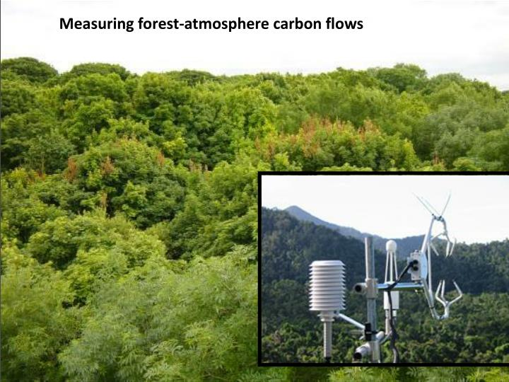Measuring forest-atmosphere carbon flows