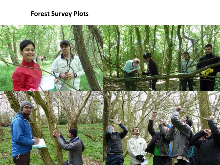 Forest Survey Plots
