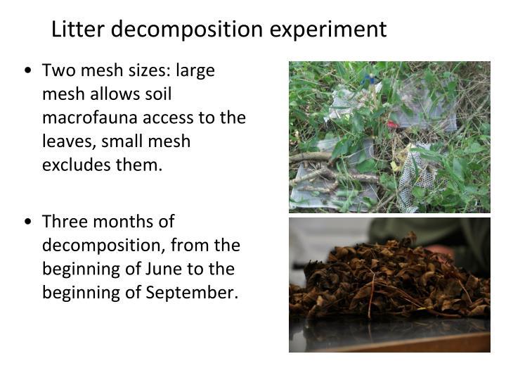 Litter decomposition experiment